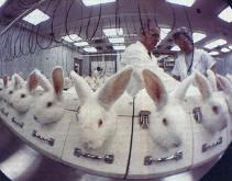 Израиль запретил косметику, протестированную на животных - фото