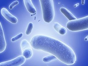Новая бактерия поможет похудеть - фото